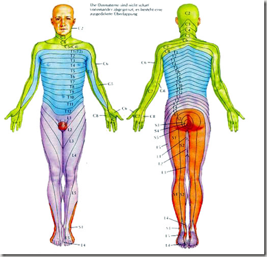 帯状疱疹の痛い場所